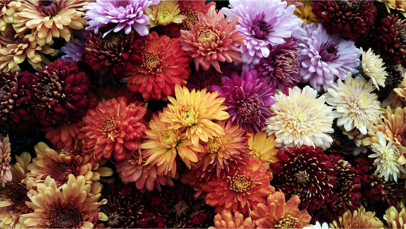 Rich Chrysanthemums for Fall Wedding